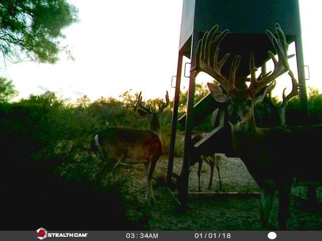 deer-11