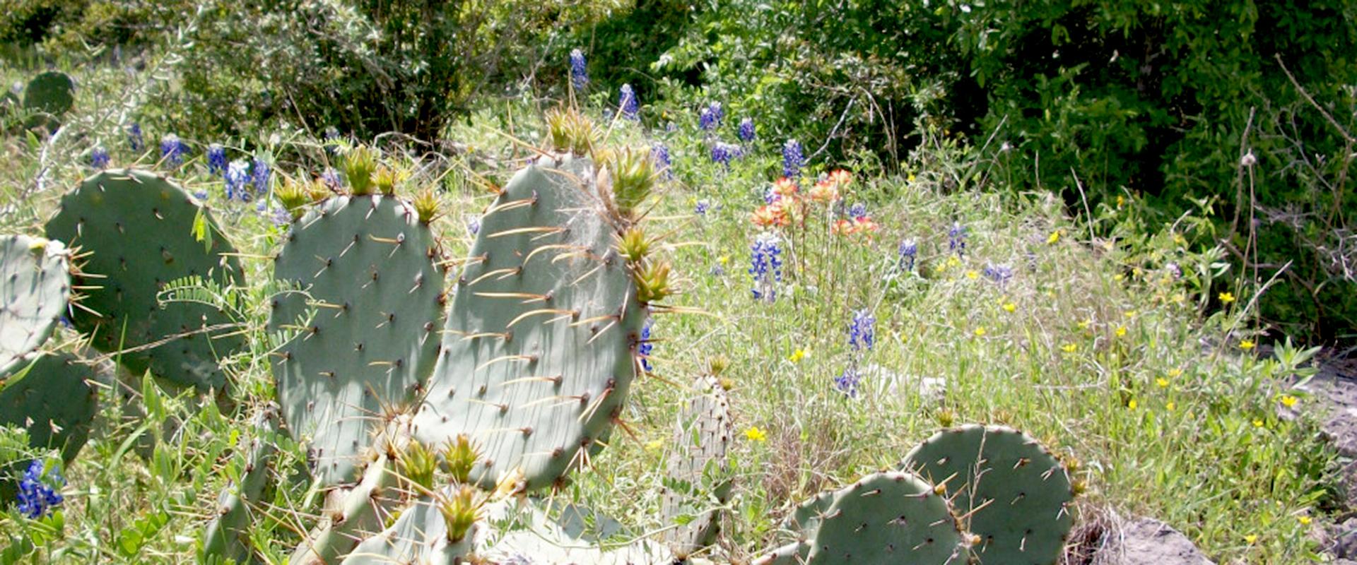 cactuswildflower-1024x768crop